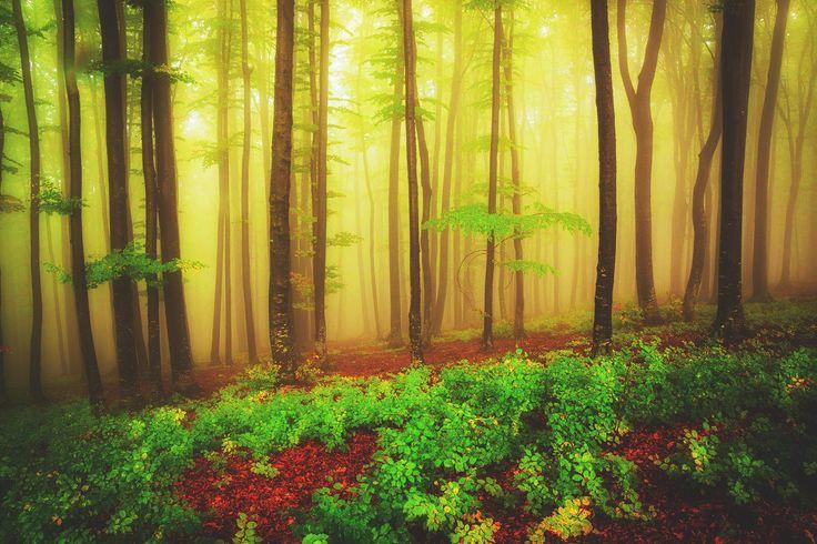 Enjoy the joy of autumn by serban bogdan on 500px