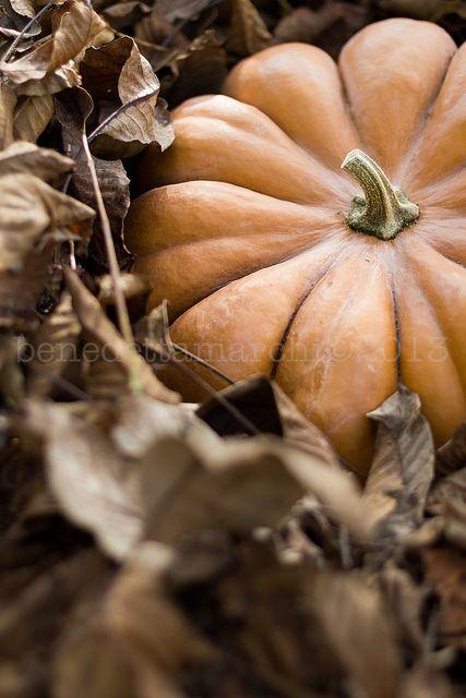 Fall soft Orange