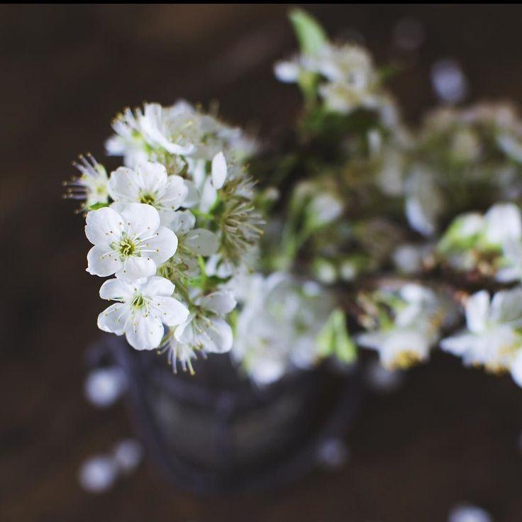 Ho un debole per i fiori bianchi fosse per me avrei il giardino ricoperto di fiori bianchi e blu ( e lilla e rosa chiaro). Come è cominciata la vostra settimana? . . .  #nikonphotography #vscocam #hobbitlifestyle #springtime #dreaminggarden #lavitainunoscatto