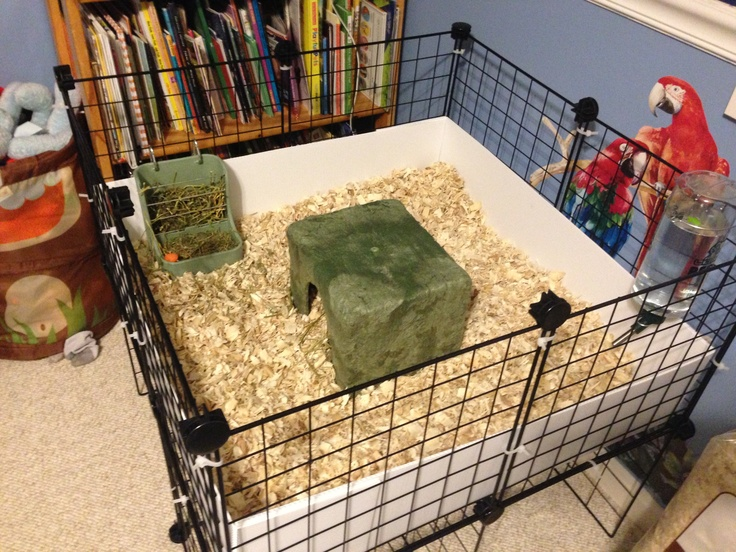 46 best images about guinea pigs on pinterest cavy for Diy playpen for guinea pigs