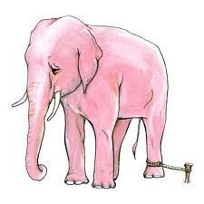 the story of the elephant with a fixed mindset. A very quick reminder for students of any age - what is your mindset?