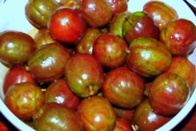 fruit picking tamarind fruit