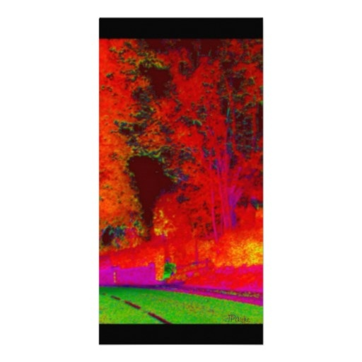 Glowing Forest Along Road Photo Card
