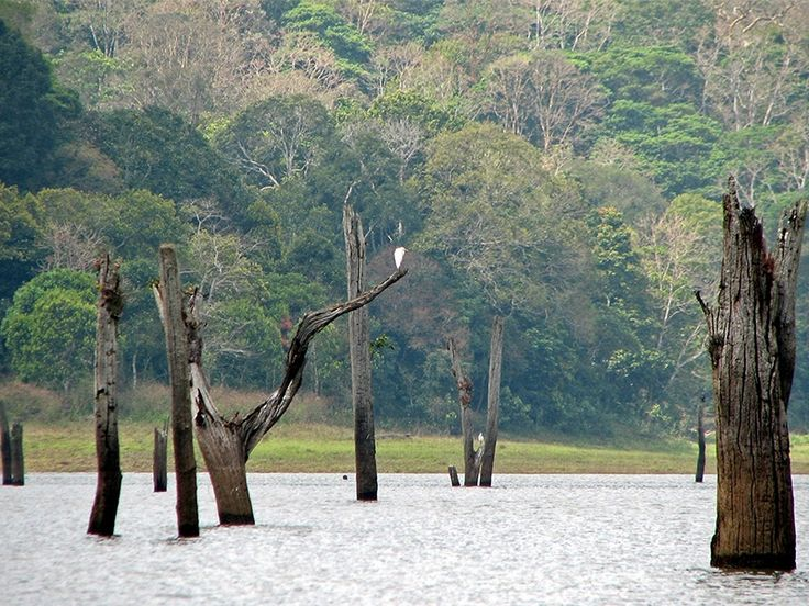 Periyar National Park , Periyar Tiger Reserve in Kerala, India