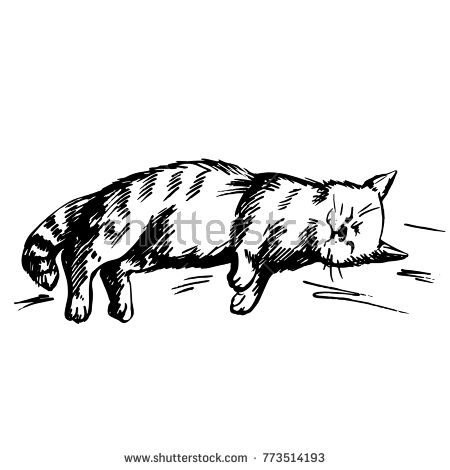 A quick sketch of a sleeping cat drawn by a black marker. The sketch is translated into a vector. Isolated
