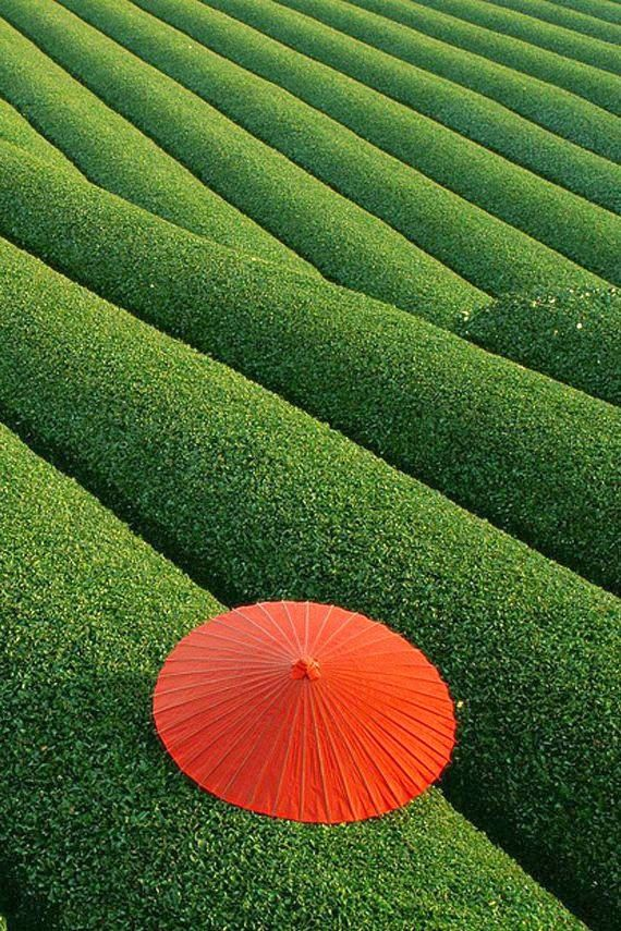 Fascinating Places Never to be Missed - Fields of Tea, China