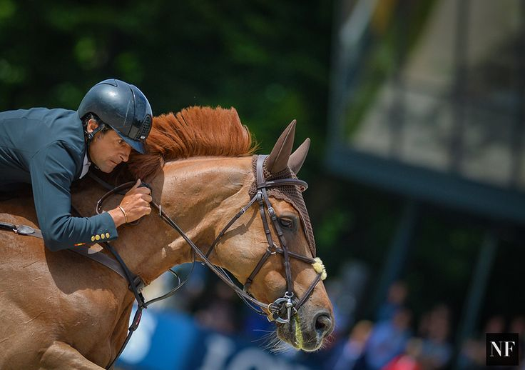 FEI Nations Cup at CHIO Rotterdam     Source: Noelle Floyd