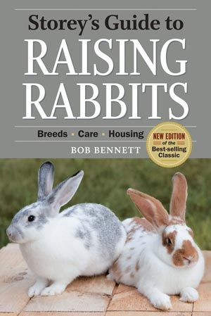 Growing a Rabbit Garden--great tips for fresh and dried rabbit greenery