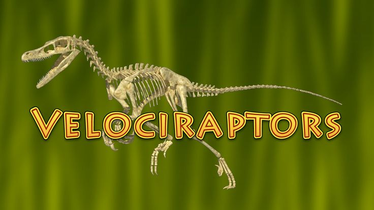 10 Facts About Velociraptor (Dinosaurs for Kids) - raptor