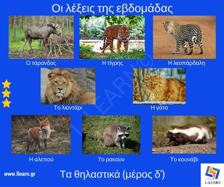 Mammals (part 4). Θηλαστικά (μέρος δ'). #λέξεις #Ελληνικά #ελληνική #γλώσσα #λεξιλόγιο #Greek #words #Greek #language #vocabulary #LLEARN