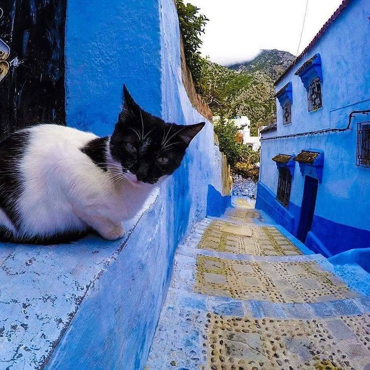 Good morning form  Chefchaouen  Morocco have a great day . #chefchaouen #morocco #maroc #morokko #home #door #blue #wonderful #architecture #design #discover #trip #vacation #traveling #travel #northernmorocco #northernafrica #color #instatravel #adventure #tetouan #agadir #chaouen #warsow #madrid #berlin by morocco_tomorrow http://bit.ly/AdventureAustralia