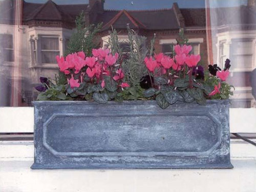 Autumn window box... Lavender, cyclamen and pansies... Would look a lot  better with white cyclamen and white pansies