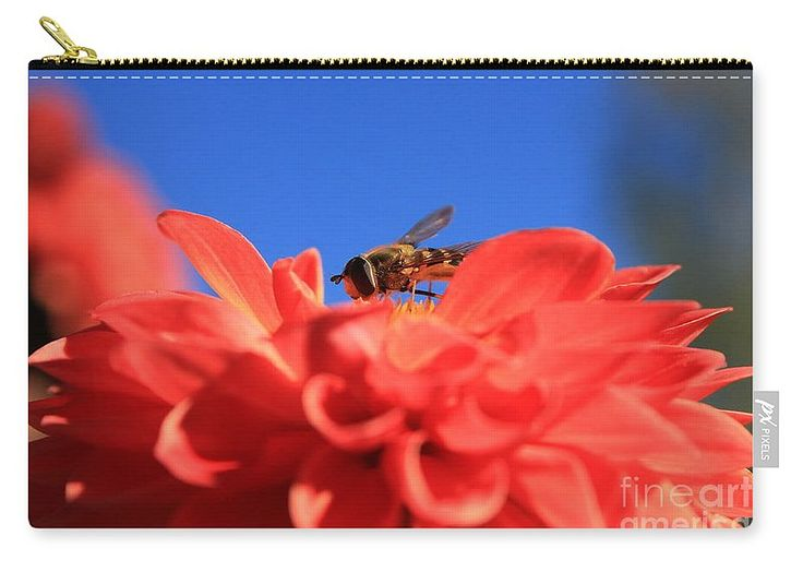 Flowers Fly Carry-all Pouch featuring the photograph Flowers Fly On Dahlia 1 by…