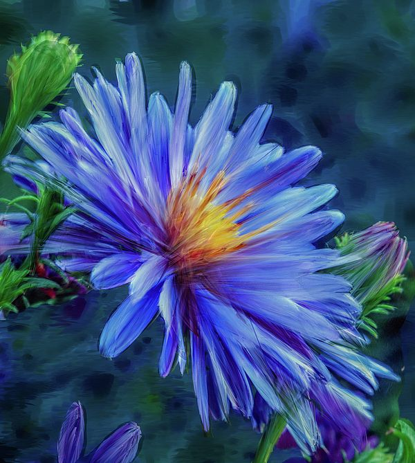 Blue aster photopainted