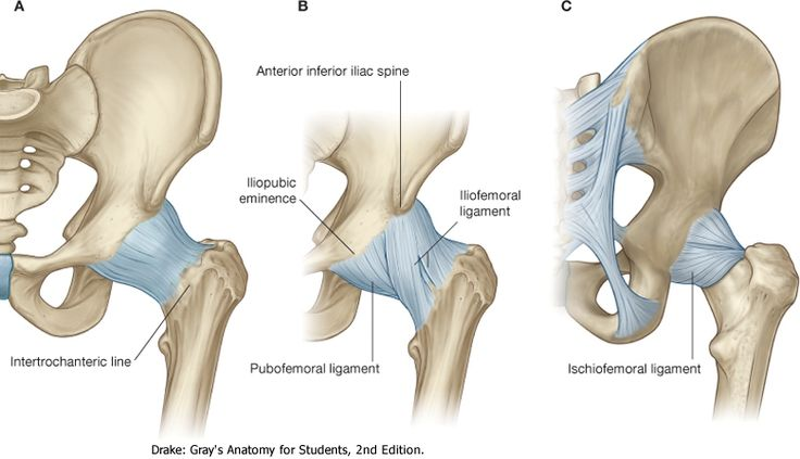 Hip Joint:Anatomy,Movement & Muscle involvement » How To Relief