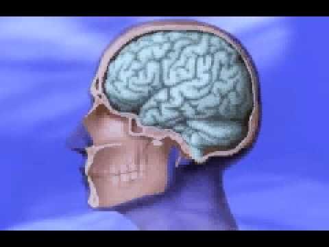 Jeugdjournaal hersenen