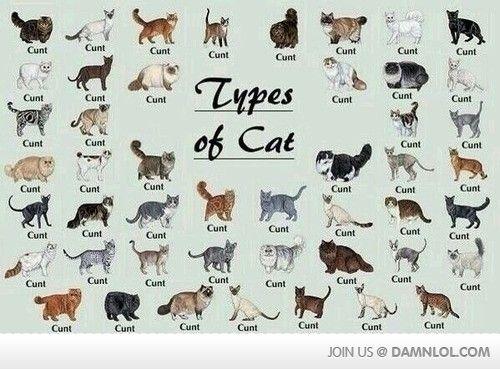 Types Of Cat I've never laughed so hard!!! ~K