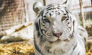 Groupon - 90-Minute Zoo Tour for 2, 5, or 10 at Rancho Las Lomas Wildlife Foundation (Up to 55% Off) in Irvine-Lake Forest. Groupon deal price: $29