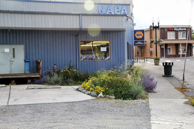 NAPA Auto Parts store - cluster of three rain gardens treats 95% of the stormwater from roof and parking area.  Eatonville, WA - Rain Garden Capital.  1st NAPA Auto Parts store in North America with a rain garden.
