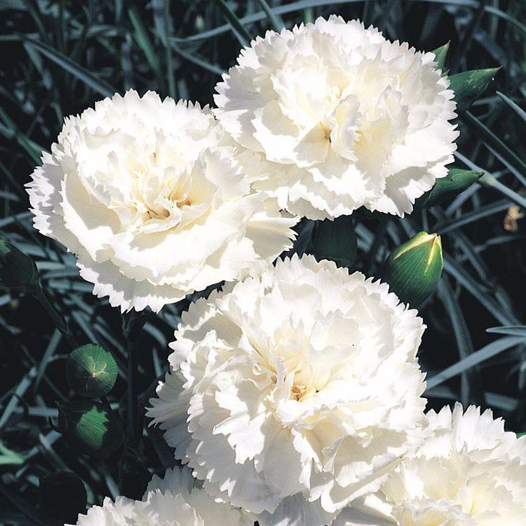 13 best White Garden images on Pinterest Arrows Garden and Gardens