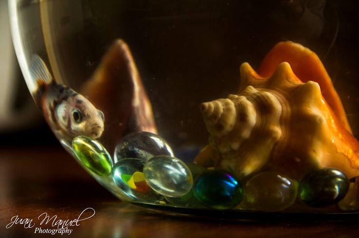 Hermoso pez, colores