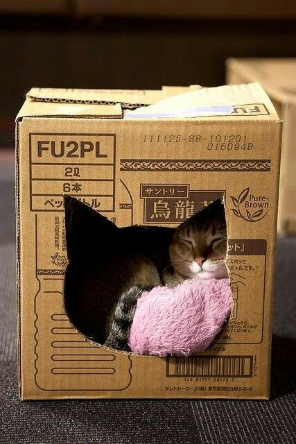 DIY Cat Bed that you know they will love! {image only}
