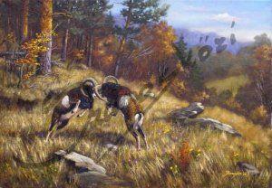 Őszi muflonok