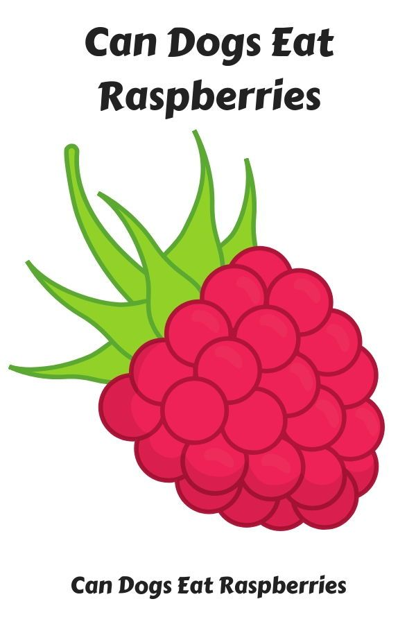 can dogs eat raspberry