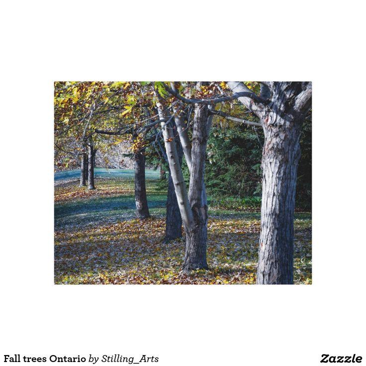 Fall trees Ontario Canvas Prints