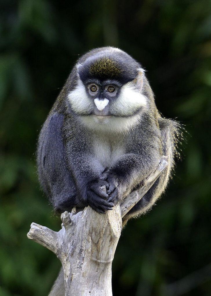 Weird monkey   Weird Species / Especies Raras   Animals ...