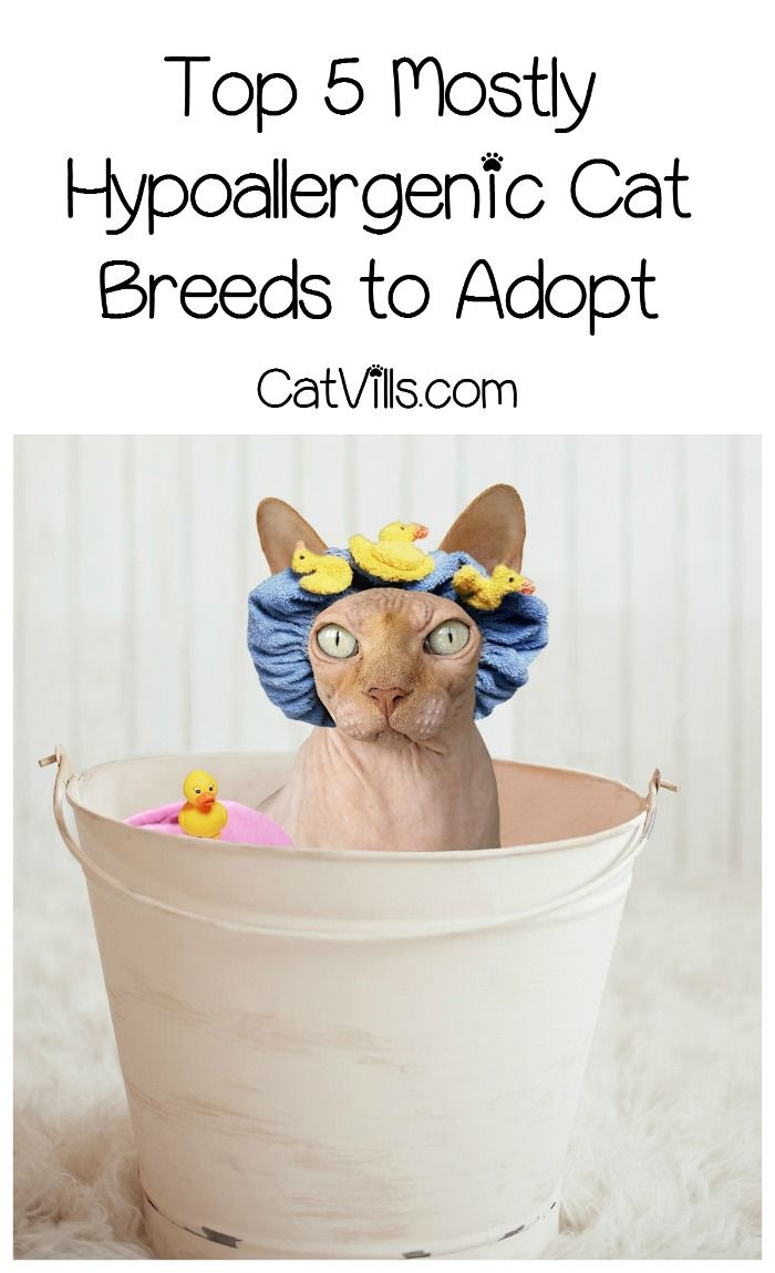 408 best Pets images on Pinterest