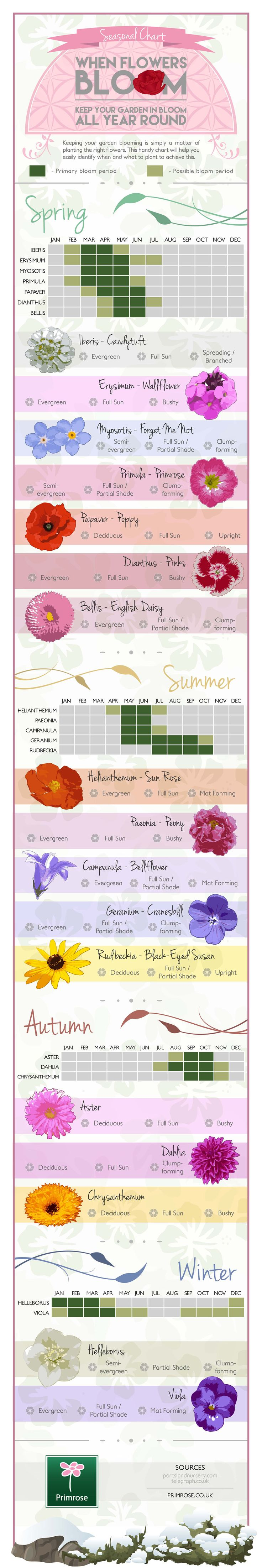 Do you wish your garden could be in bloom all year long? All it takes is knowing which flowers to plant in each season and you're guaranteed a colorful garden whatever time of year. Primrose.co.uk has created this infographic so you can simply pick your favorite plants for each season.