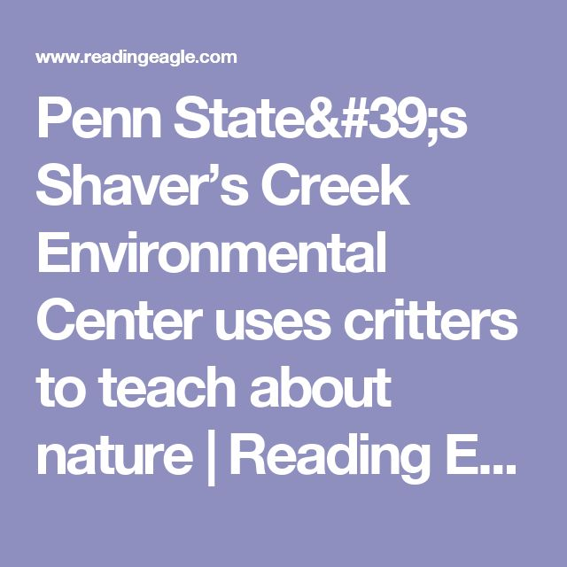 Penn State's Shaver's Creek Environmental Center uses critters to teach about nature | Reading Eagle - NEWS