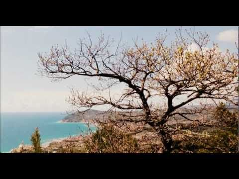 The Sound of Birds - 60 Minutes - Natural Sounds - Il suono degli uccelli