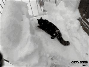 schwarze Katze versucht im Schnee unterzutauchen