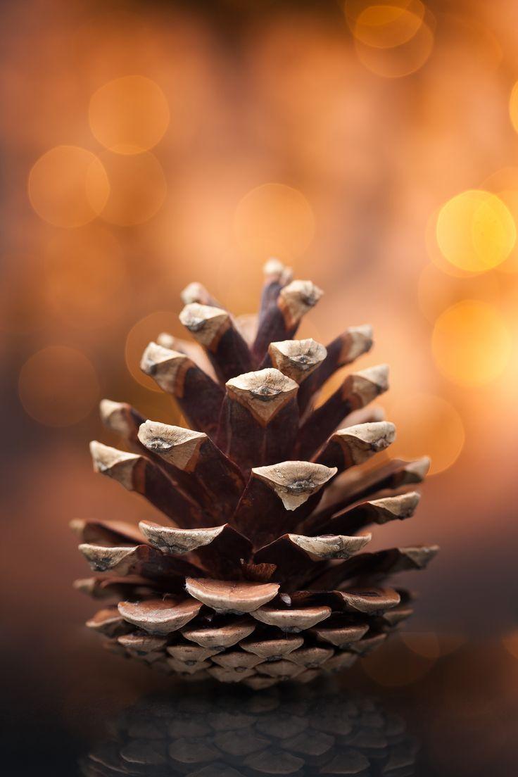 Pine Cone (not an acorn)