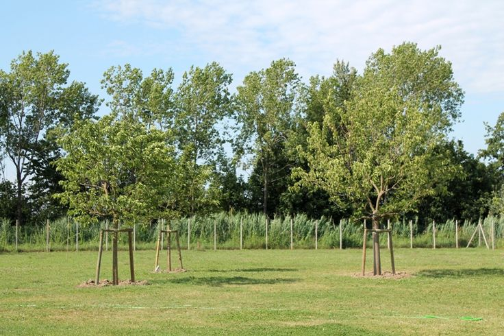 Area sgambamento con i nuovi alberi alti... / the dog run with new tall trees...