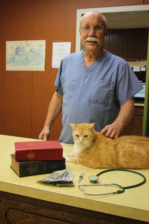 how to get a doctor of veterinary medicine