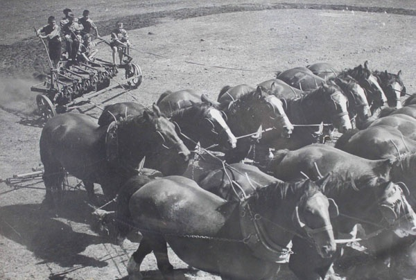 Children on plough with a 14 horse team at Fairbridge Farm School, Molong. Image courtesy Bigrigg Collection, Molong and District Historical Society