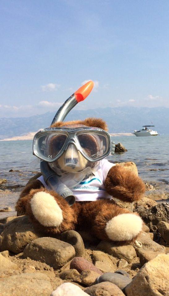 Der Urlaubär von ferienwohnungen.de im Tauchurlaub in Kroatien ... #urlaubär #kroatien