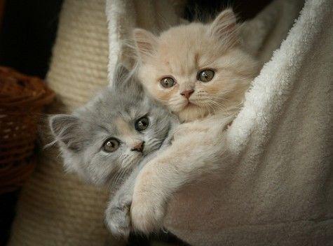 Adorable Kittens animals cat kitten kitty cute animals