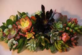 where to buy colorful succulents = Etsy!