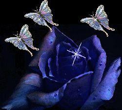 Mavi Gül Gif Blue Rose Animated Gif ~ Renkli Duvar