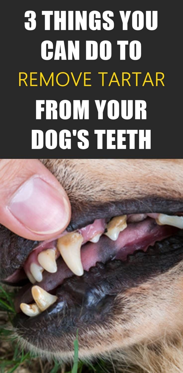 Do you see a lot of tartar on your dogs teeth find out