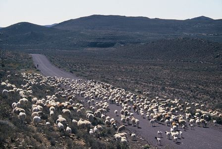The Great Karoo is South Africa's heartland, a massive, arid part of the country that spans more than 400 000 square kilometres and 50 towns.