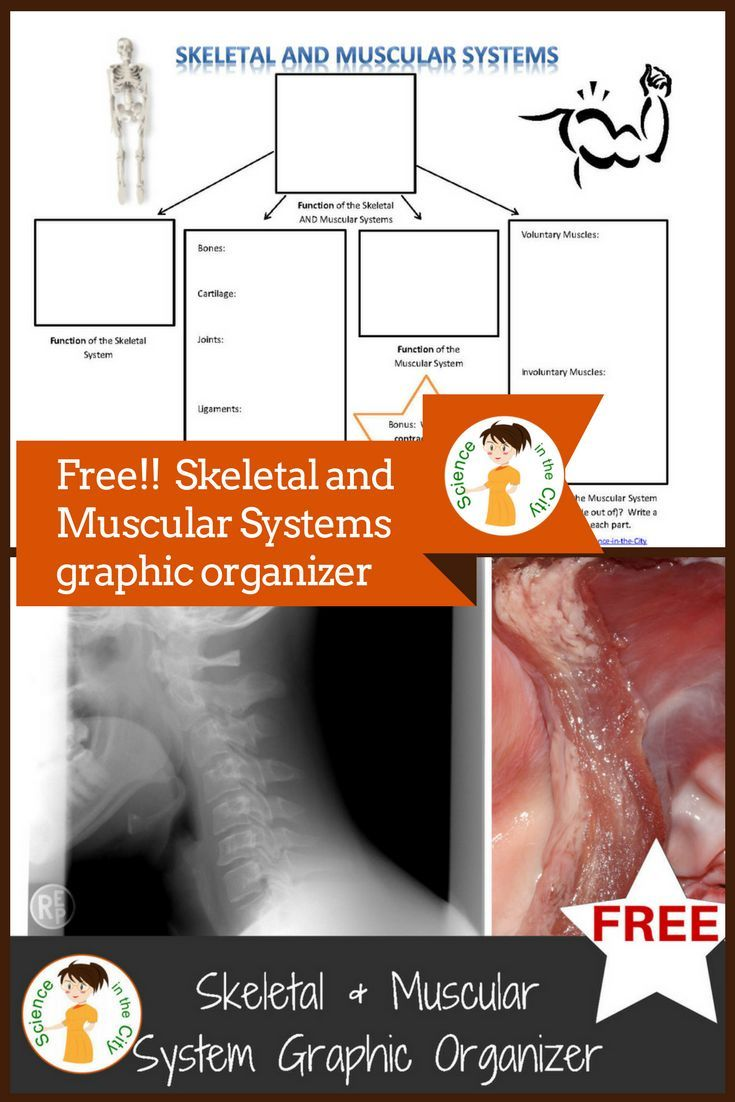 An Innovative And Memorable Look At The Skeletal And Muscular