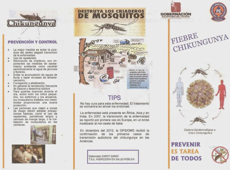 PROTECCIÒN CIVIL TÀCHIRA: PREVENIR ES TAREA DE TODOS: Fiebre Chikungunya