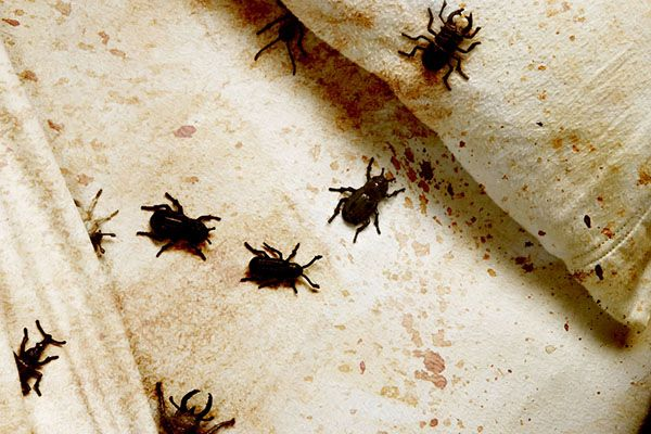 Easy Ways To Check Your Room For Signs Of Bed Bugs
