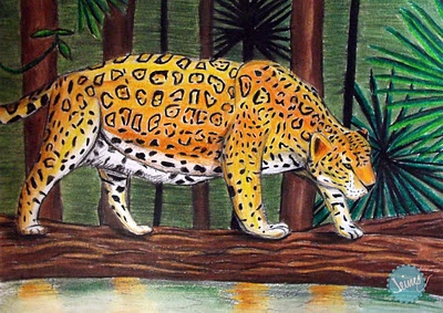 Los Suelos del Jaguar _ James Vásquez  Work selected for the first edition of the award Il·lustraciència.