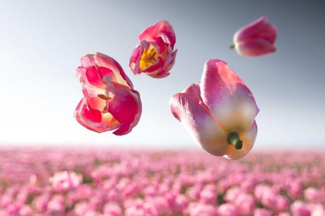 Les Fleurs anti-Gravité de Claire Droppert (8)